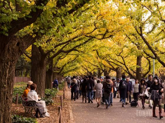 Jingu Gaien autumn leaves