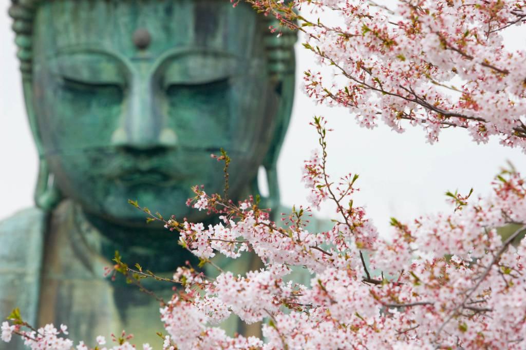 Daibutsu Great Buddha of Kamakura at Kotokuin Temple cherry blossom spring