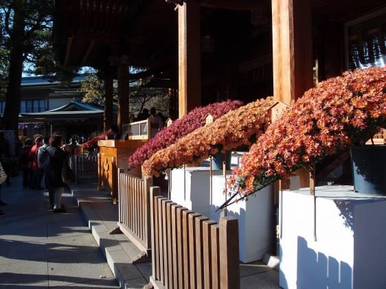 Yushima Tenjin Shrine Chrysanthemum Festivals
