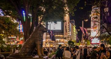 Hachiko at night
