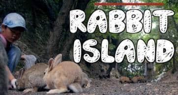 Visiting Okunoshima - Japan's Famous Rabbit Island